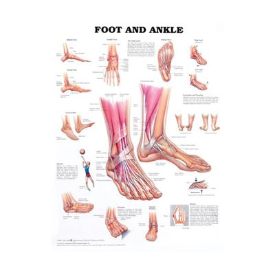 Picture of FOOT & ANKLE CHART