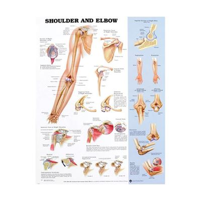 Picture of SHOULDER & ELBOW CHART