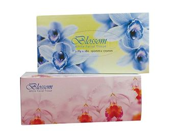 Picture of BLOSSOM FACIAL TISSUE 2 PLY
