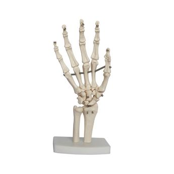 Picture of LIFE SIZE HAND MODEL